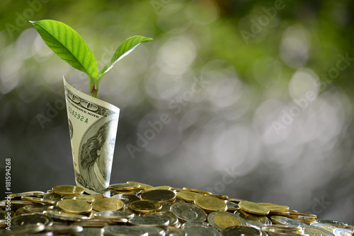 Fototapeta Image of pile of coins and rolled bank note with plant on top showing business, saving, growth, economic concept