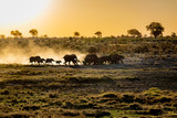 Elefants at sunset - 181599457