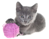 Small gray shorthair kitten plays with ball of yarn isolated