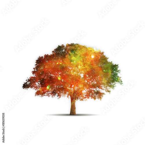 Plexiglas Heelal tree