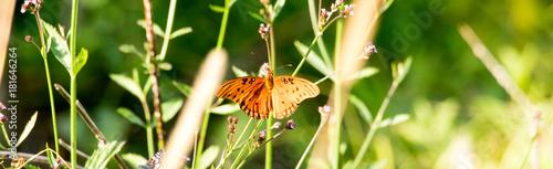 Deurstickers Vlinders in Grunge Wings and Things