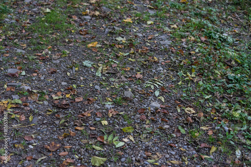 Keuken foto achterwand Lavendel forest path in autumn with leaves