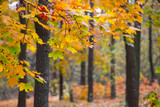 quiet autumn park landscape - 181656293