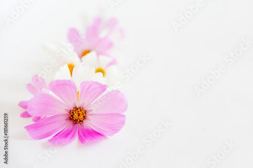 Fototapeta Bunch of flowers