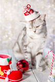 Funny christmas cat with santa hat on head and christmas toys.