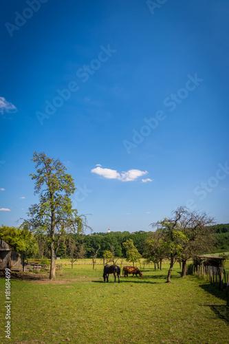 Foto op Canvas Blauwe jeans Pferde und Rinder