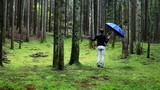 Back view of a man with a blue umbrella stands in a wet and mossy forest landscape.  - 181689090