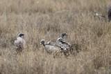 vulture - 181700658