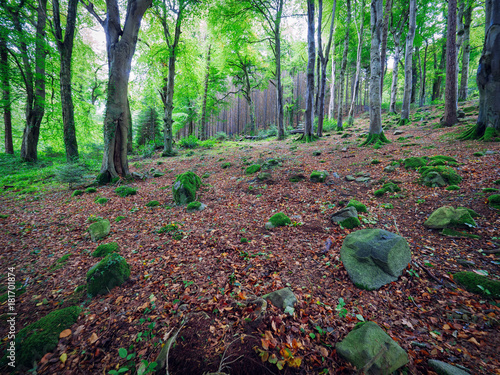 Foto op Canvas Cappuccino Early Autumn countryside morning,Northern Ireland