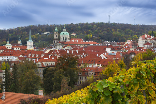 Staande foto Praag Vineyard of Prague and St Nicholas church