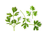 Parsley herb isolated on white background - 181704030