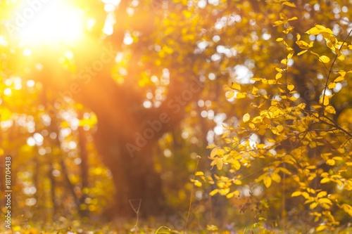 Tuinposter Herfst Autumn.