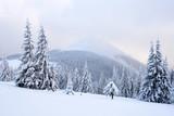 Fantastic winter landscape - 181706812