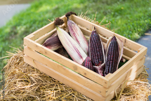 Fresh purple corn in the wooden box for background.Thailand.