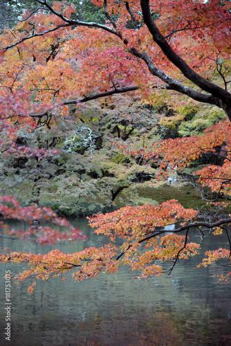 Staande foto Zalm 湖畔の秋