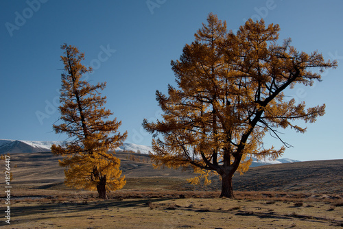 Foto op Canvas Blauwe jeans Russia. Siberia, Autumn in the Altai Mountains