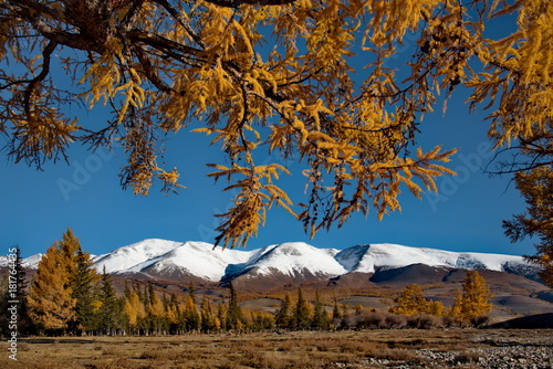 Wall mural Russia. Siberia, Autumn in the Altai Mountains