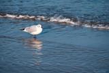 Eine Möwe steht am Strand im Wasser - 181767619
