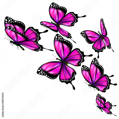 Fotobehang Vlinder beautiful pink butterflies, isolated on a white