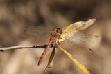 Dragonfly - 181776054
