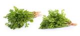 fresh coriander leaves on white background - 181776672