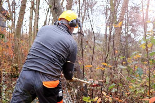 Fototapeta Holzfäller bei der Arbeit im Wald