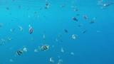 ein Schwarm Wimpelfische schwimmt im Meer - 181777633