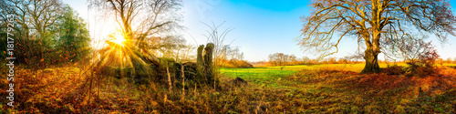 Foto op Aluminium Herfst Panorama of a autumnal landscape with bare oak tree and green meadow at sunrise