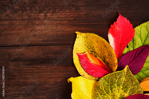 Multicolor autumn leaves on wood Poster