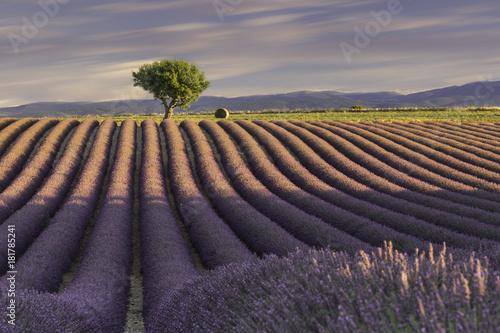 Tuinposter Lavendel Plateau de Valensole