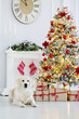 golden retriever dog lying down by the Christmas tree indoors
