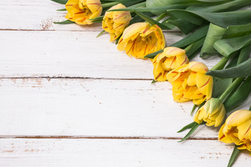 Yellow tulips, spring background for women's day - 8 march or card for mother's day