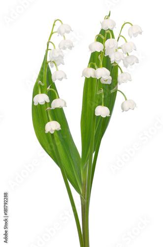 Plexiglas Lelietjes van dalen Convallaria majalis flowers