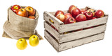 apples in wooden box isolated - 181800806