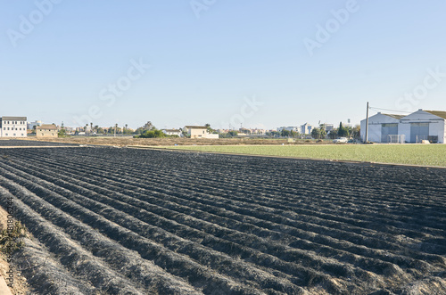 Fields of garden vegetable in Valencia, Huerta de Valencia. Field of tiger nut after was burned. Tiger nut milk is a drink typical of Valencia