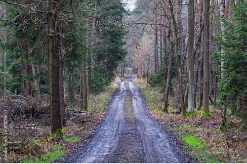 Fotobehang Weg in bos Leśna droga.
