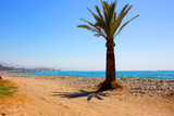 Palm tree. Palm tree in the beach. Costa del Sol, Andalusia, Spain. - 181841888