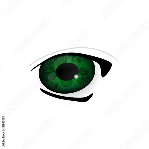 Eye. Human eyes closeup. Beautiful big eyes. Illustration - 181842825