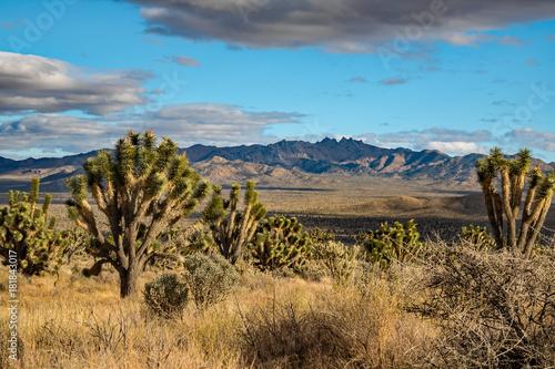 Sticker Mojave Wüste