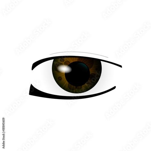 Eye. Human eyes closeup. Beautiful big eyes. Illustration - 181845609