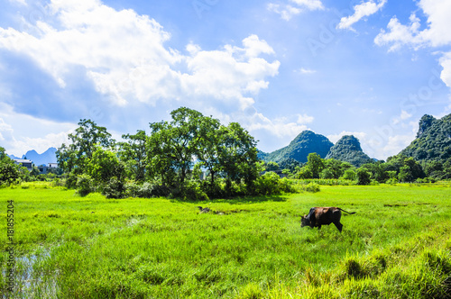 Poster Lime groen Beautiful countryside scenery in summer