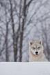 Fototapeta Biały - Zimą -