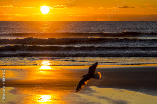 Staande foto Ochtendgloren Sunrise - Mangawhai, New Zealand