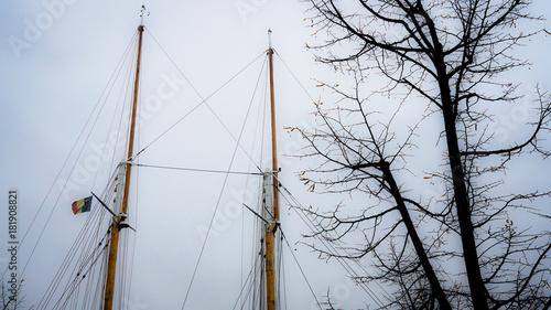 In de dag Antwerpen Mast and tree