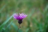 Pink flower head - 181913255