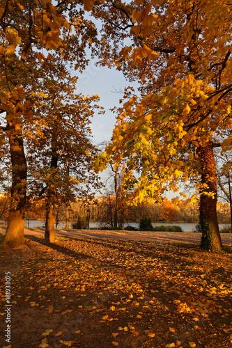 Couleurs d'automne au parc de la Tête d'Or Poster