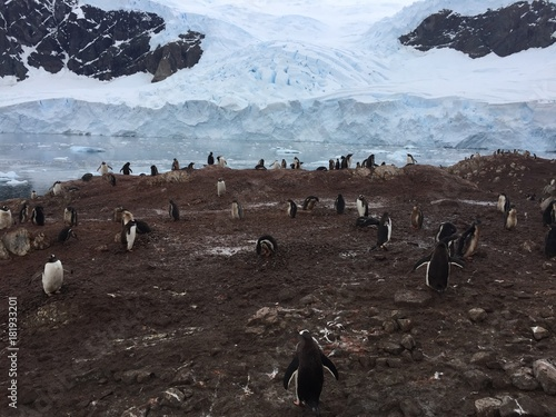 Foto op Canvas Antarctica Antarctique