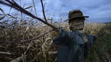 Scary scarecrow in a hat - 181946668