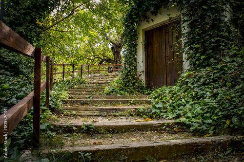 Tuinposter Weg in bos Alborache