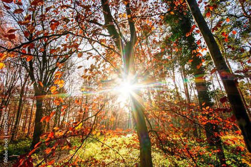 Invitation to dream, silence, relaxation, timeout, happiness: wonderful day in autumn forest :)